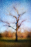 Warner Park Tree Print by David Morel