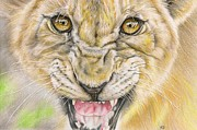 Lioness Drawings Posters - Warrior Mother Poster by Karina Griffiths