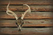 Log Cabin Art Photos - Warsaw Deer by Lynn Sprowl
