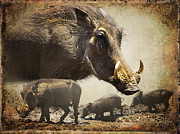 Merged Framed Prints - Warthog Profile Framed Print by Ronel Broderick