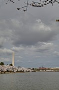 Outside Photo Posters - Washington Monument - Cherry Blossoms - Washington DC - 011333 Poster by DC Photographer