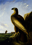 Famous Artists - Washington Sea Eagle by John James Audubon