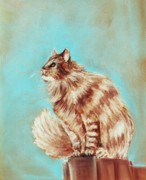 Orange Art Pastels Framed Prints - Watch Cat Framed Print by Anastasiya Malakhova