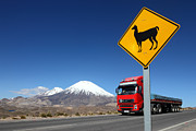 James Brunker - Watch Out For Llamas