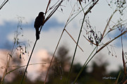 Cay Photos - Watchful Bird at Green Cay by Michelle Wiarda