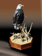 Still Life Sculptures - Watchful Eyes - Life Size Bald Eagle by Jim Gundlach