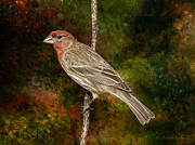 J Finch Art - Watchful House Finch by J Larry Walker
