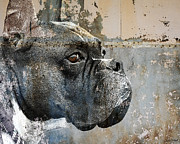 Boxer Dog Digital Art Metal Prints - Watchful Metal Print by Judy Wood