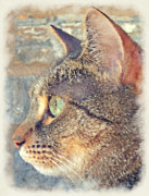 Feline Digital Art - Watching by David G Paul