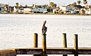 Louisiana Artist Prints - Watching over the Bay Print by Scott Pellegrin