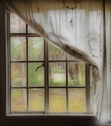 Sheer Metal Prints - Watching the Rain Metal Print by Cheryl Young