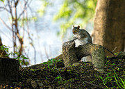 Squirrels Framed Prints - Watching you watching me Framed Print by Bob Orsillo