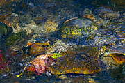 Water In Creek Posters - Water Abstract Poster by Sharon  Talson