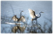 White Birds Prints - Water Ballet  Print by Saija  Lehtonen