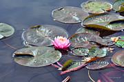 Kay Lovingood - Water Blossom