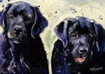 Labradors Framed Prints - Water Boys Framed Print by Molly Poole