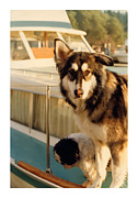 Boats On Water Prints - Water Collie and Buddy Print by Jack Pumphrey