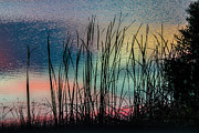 Lesley Brindley - Water Colors