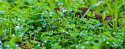 Water Drops On The  Grass 0048 Print by Terrence Downing