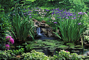 Lilly Pad Prints - Water Feature - FS000150 Print by Daniel Dempster