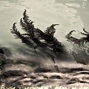 Relaxing Prints - Water Fronds Print by David Bowman