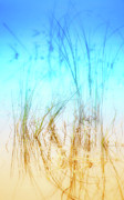 Rain Digital Art Metal Prints - Water Grass - Outer Banks Metal Print by Dan Carmichael