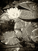 White Water Lilies Photos - Water lilie and frog by Jose Elias - Sofia Pereira