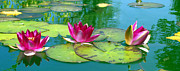 Lotus Pond Framed Prints - Water Lilies Framed Print by Ben and Raisa Gertsberg