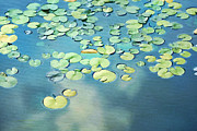 Water Lillies Prints - Water Lilies Print by Darren Fisher