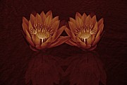 Pistils Posters - Water Lilies in Deep Sepia Poster by David Dehner