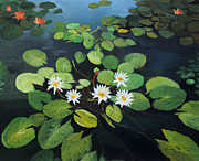 Lotus Pond Paintings - Water Lilies by Kiril Stanchev