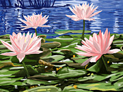 Water Lilies Print by Tim Gilliland