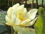 Watercolors Drawings - Water Lilly by Gerian Dodds