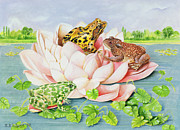 Frog Paintings - Water Lily by EB Watts