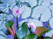 Water Lily II Print by Ann Johndro-Collins