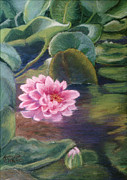 Pinks Pastels Posters - Water Lily in Bloom  Pastel Poster by Antonia Citrino