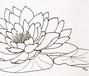Anita Lewis - Water Lily Line Drawing