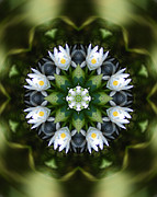 Mandala Photos - Water lily mandala by Peter Kallai