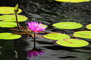 Greg Thelen - Water Lily on the Pond