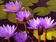 Lilies Digital Art Posters - Water lily Pond Poster by Amy Vangsgard