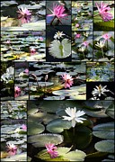 Pink And White Flowers Framed Prints - Water Lily Pond Collage 2 Framed Print by Carol Groenen