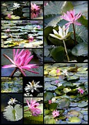 Pink And White Flowers Framed Prints - Water Lily Pond Collage Framed Print by Carol Groenen