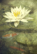 Painterly Framed Prints - Water Lily Framed Print by Scott Norris