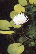 Stacy Vosberg - Water Lily