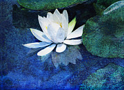 White Water Lilies Framed Prints - Water Lily Two Framed Print by Ann Powell