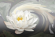White Water Lily Art - Water Lily Whirlpool by Gill Billington