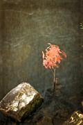 Michelle Calkins - Water Maple