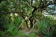 Florida Gifts Framed Prints - Water Oak. Three Lakes W.M.A. Framed Print by Chris  Kusik