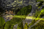 Nature Center Pond Prints - Water Plant With Bird Merged Image Print by Thomas Woolworth