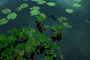 Sanjay Deva - Water plants